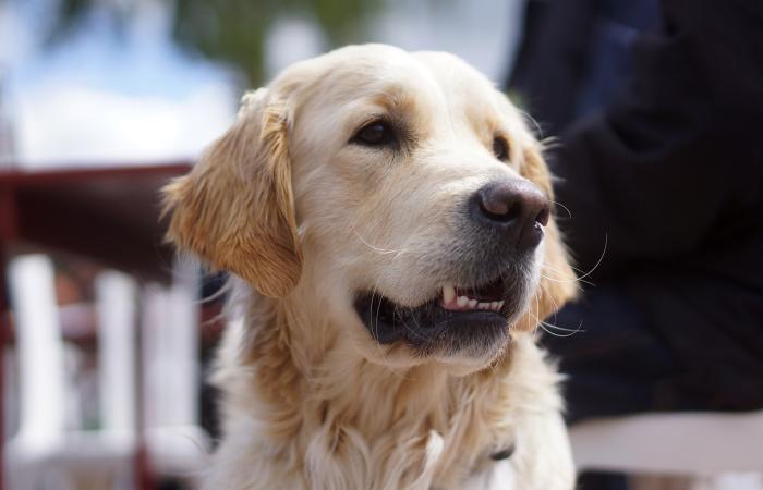 Vodící pes, parťák do pohody i nepohody