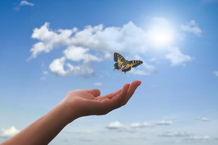 Lidé křehcí jako křídla motýlí
