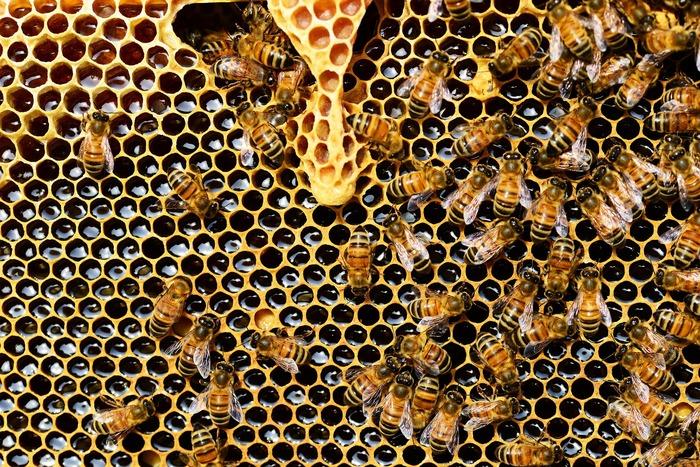 Včelí zlato - propolis