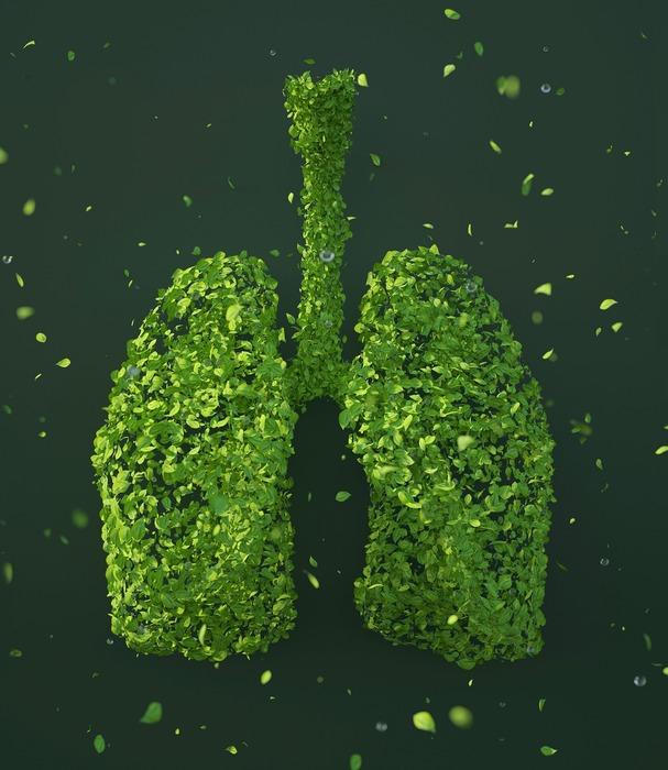 Vyčistěte si plíce